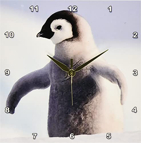 3dRose Baby Penguin Wall Clock, 10 by 10-Inch