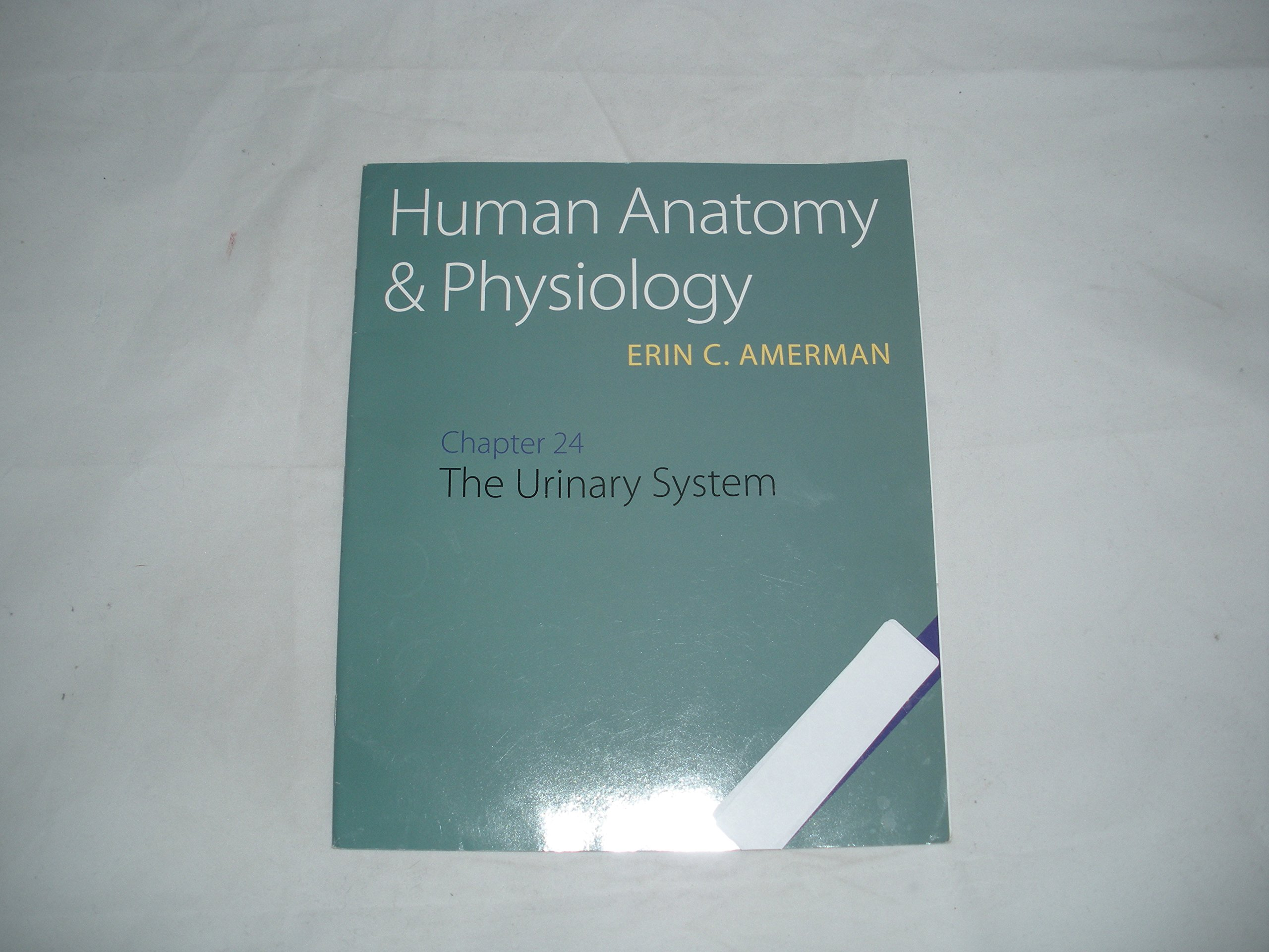Human Anatomy & Physiology (Chapter 24 The Urinary System): Erin C ...