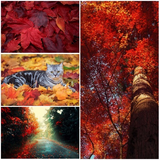 Autumn Wallpapers (Best Android Tablet Wallpaper)