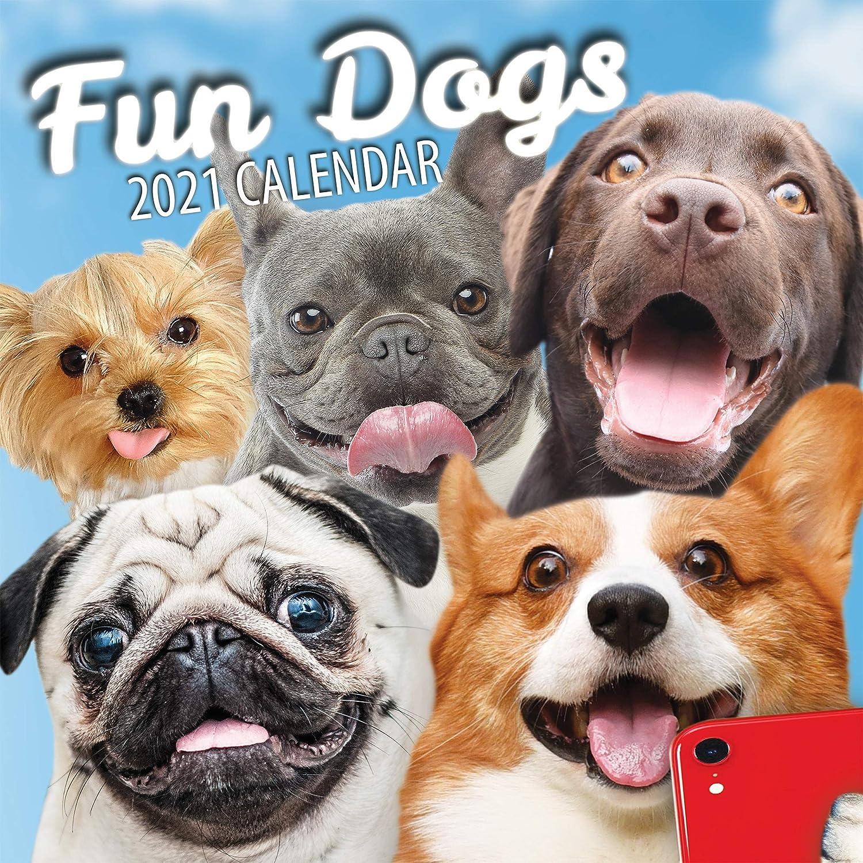 Dog Calendar 2021 Amazon.: Fun Dogs 2021 Dog Wall Calendar : Office Products