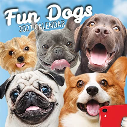 Fun Dogs 2021 Calendrier mural pour chien: Amazon.fr: Fournitures