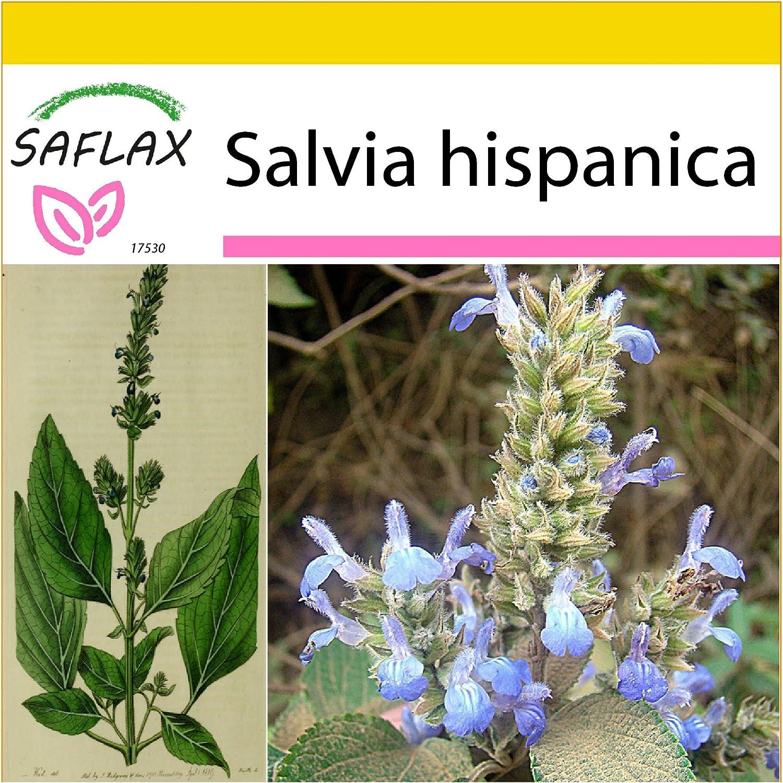 SAFLAX - Set de cultivo - Chía - 500 semillas - Salvia ...