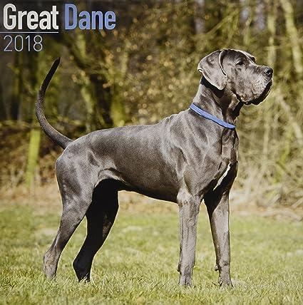 Great Dane Euro Calendar Dog Breed Calendars 2017 2018 Wall
