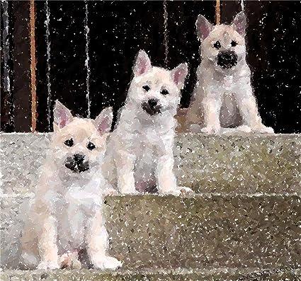 Amazoncom Norwegian Buhund Puppies Dog Portrait Matted Art Print