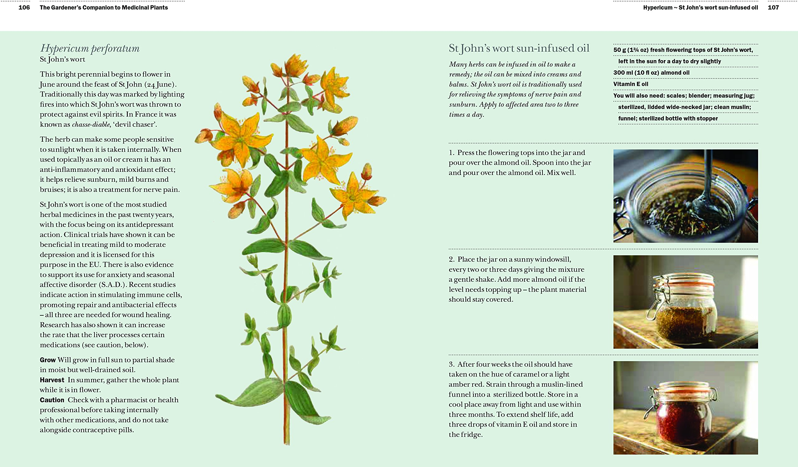 Essay on plants and their uses