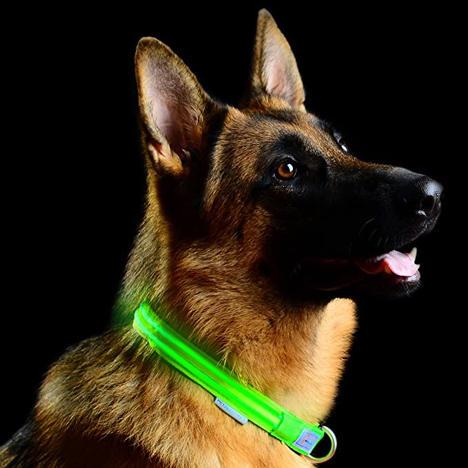 The Pet Industries Metal Buckle LED Dog Collar