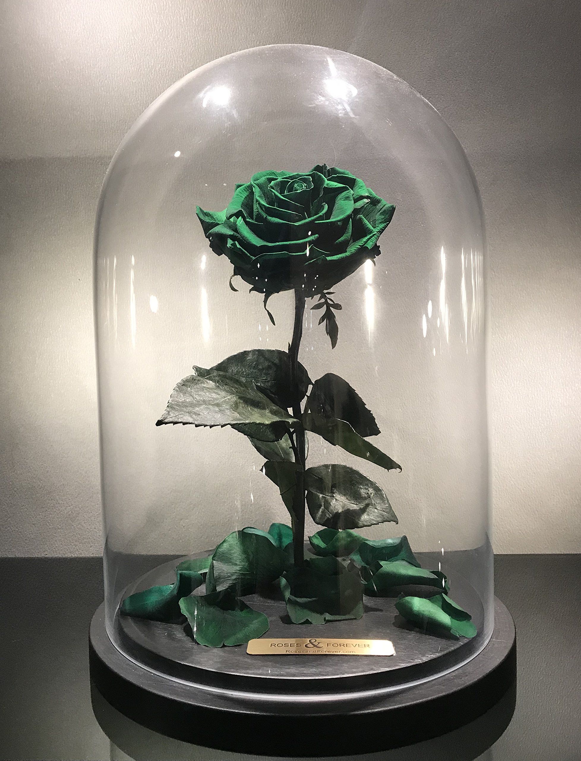 Bella Rose (Forest Green) Fresh Cut Preserved Rose in Glass Cloche. SHE WILL LOVE IT - World's Longest Lasting Roses by Roses & Forever LLC (Image #3)