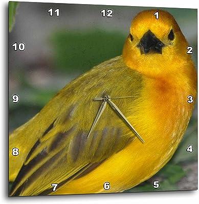 3dRose Dreamscapes by Leslie - Birds - Beautiful Golden Weaver bird - 10x10 Wall Clock (dpp_281519_1)