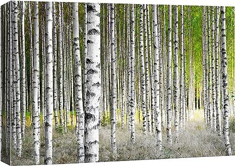Birch Grey Artist Print Heavy Weight Fine Art Paper