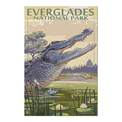 The Everglades National Park, Florida - Alligator Scene (Premium 1000 Piece Jigsaw Puzzle for Adults, 20x30, Made in USA!): Toys & Games
