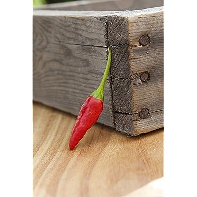 African Pequin Birds Eye Heirloom Pepper Premium Seed Packet + More : Garden & Outdoor
