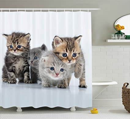 Ambesonne Kitten Shower Curtain By Animal Theme Walking Cute Little Kittens On White Background Digital