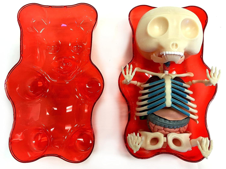 Amazon.com: Red Gummi Bear Anatomy Model: Toys & Games