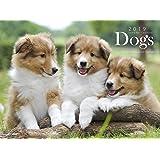 カレンダー2019 Dogs (ヤマケイカレンダー2019)