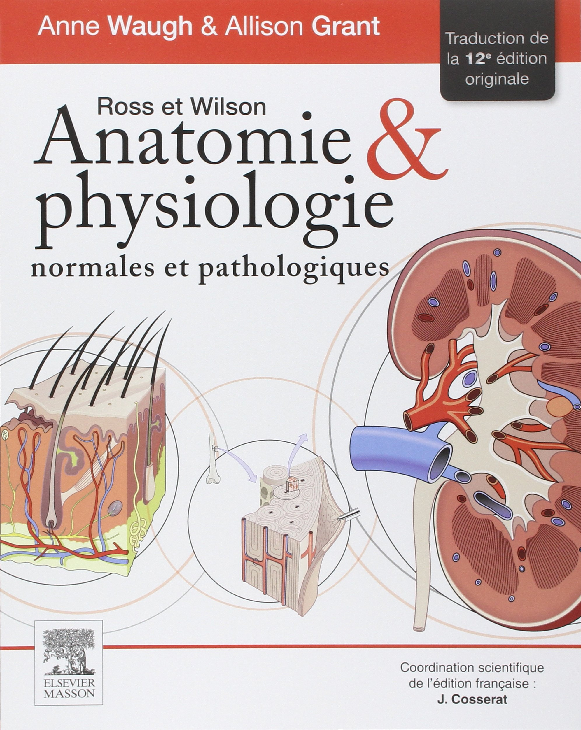 ROSS ET WILSON ANATOMIE ET PHYSIOLOGIE 12E ÉD.: Amazon.ca: Anne ...