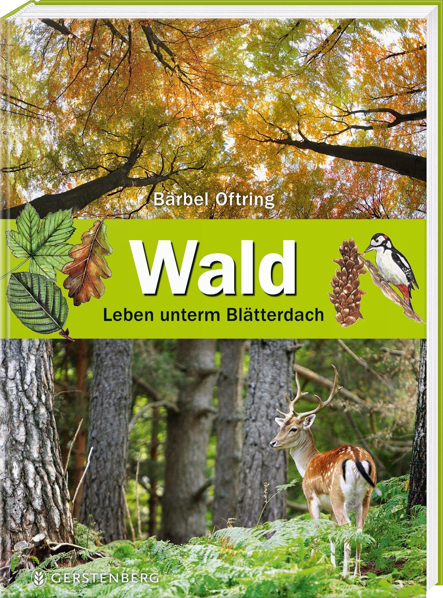 Wald: Leben unterm Blätterdach