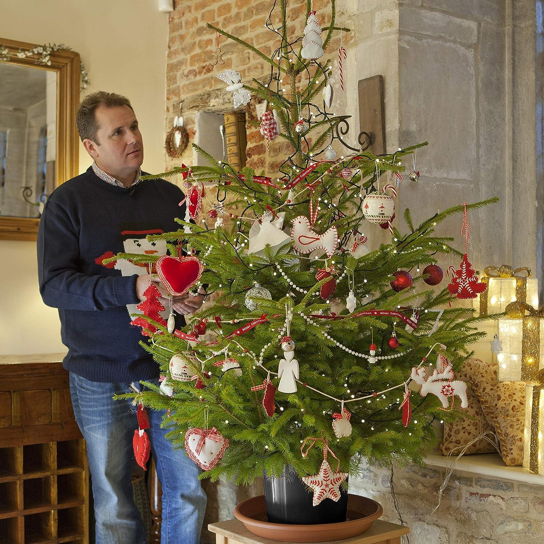 Albero Di Natale Vero.Yougarden Albero Di Natale Vero Amazon It Giardino E Giardinaggio