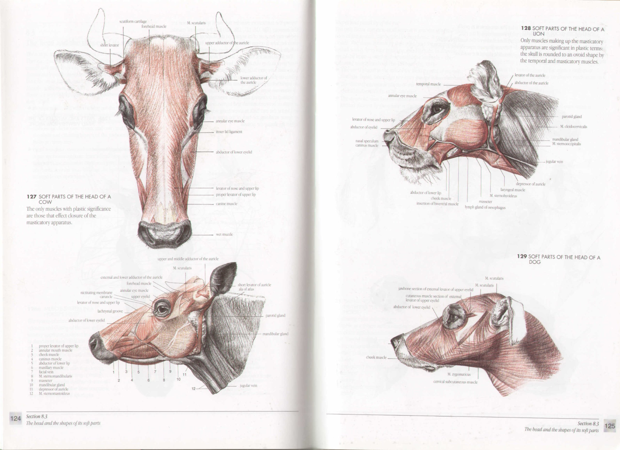 The Artist\'s Guide to Animal Anatomy: An Illustrated Reference to ...