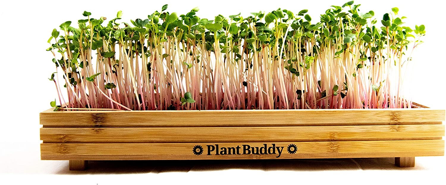 Indoor and Outdoor Microgreens Growing Kit – Bamboo Sprouting Seed Tray with Coco Coir, Spray Bottle, Radish Seeds, Liner – Countertop Planter, Microgreen Seeds Starter by Plant Buddy, 15x7 in.