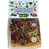 Clark&Co Organic 1500 Live Ladybugs - Good Bugs for Garden - Pre-Fed Hippodamia Convergens - Guaranteed Live Delivery!