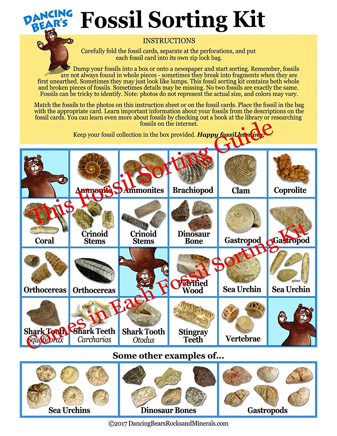 Dancing Bear Fossil Collection Sorting Activity Kit with Over 100 Pcs (More  Than 20 Different Fossil Varieties!), Educational ID Sheet, Color ID
