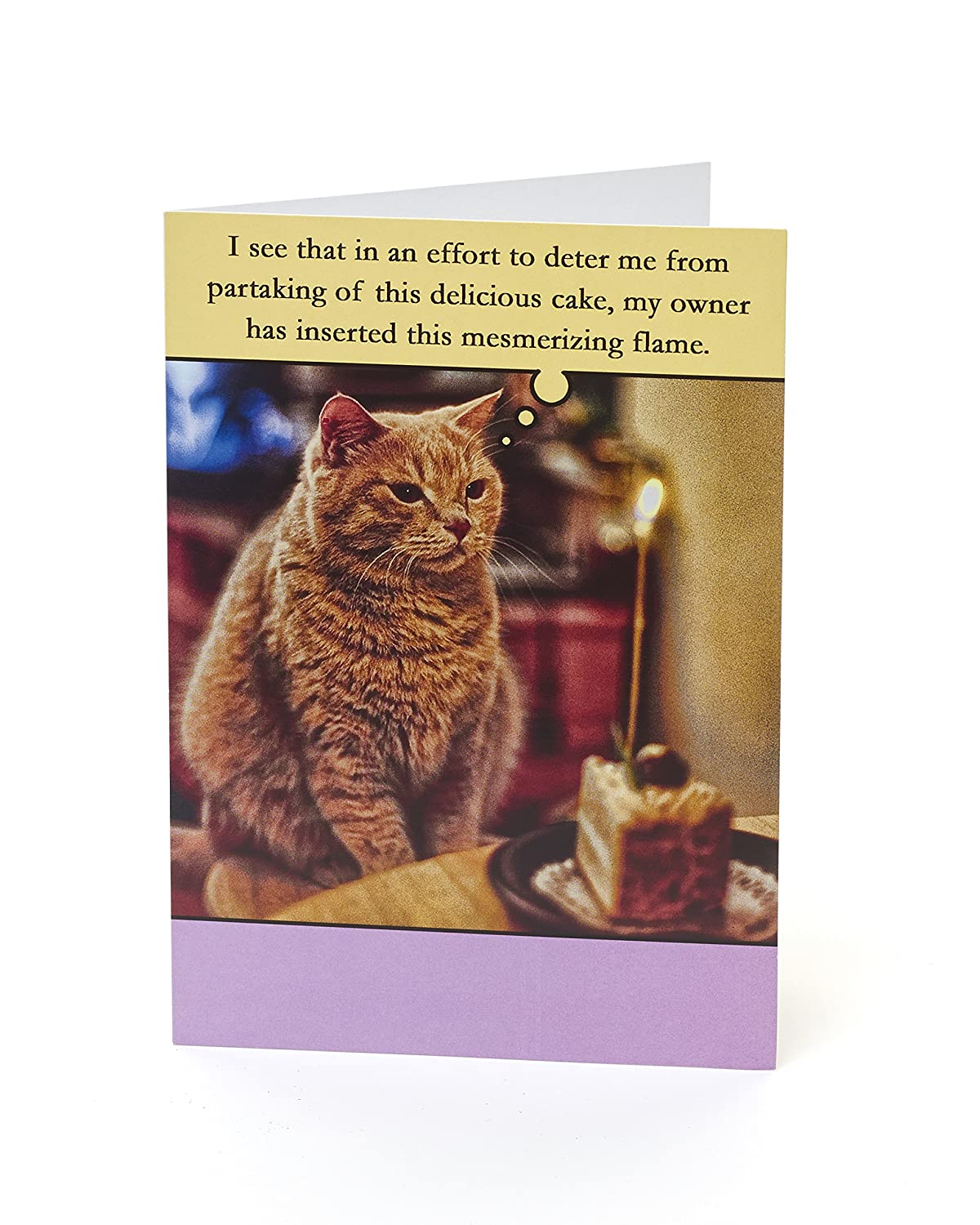 Amazon Funny Cat Birthday Cake Card Office Products