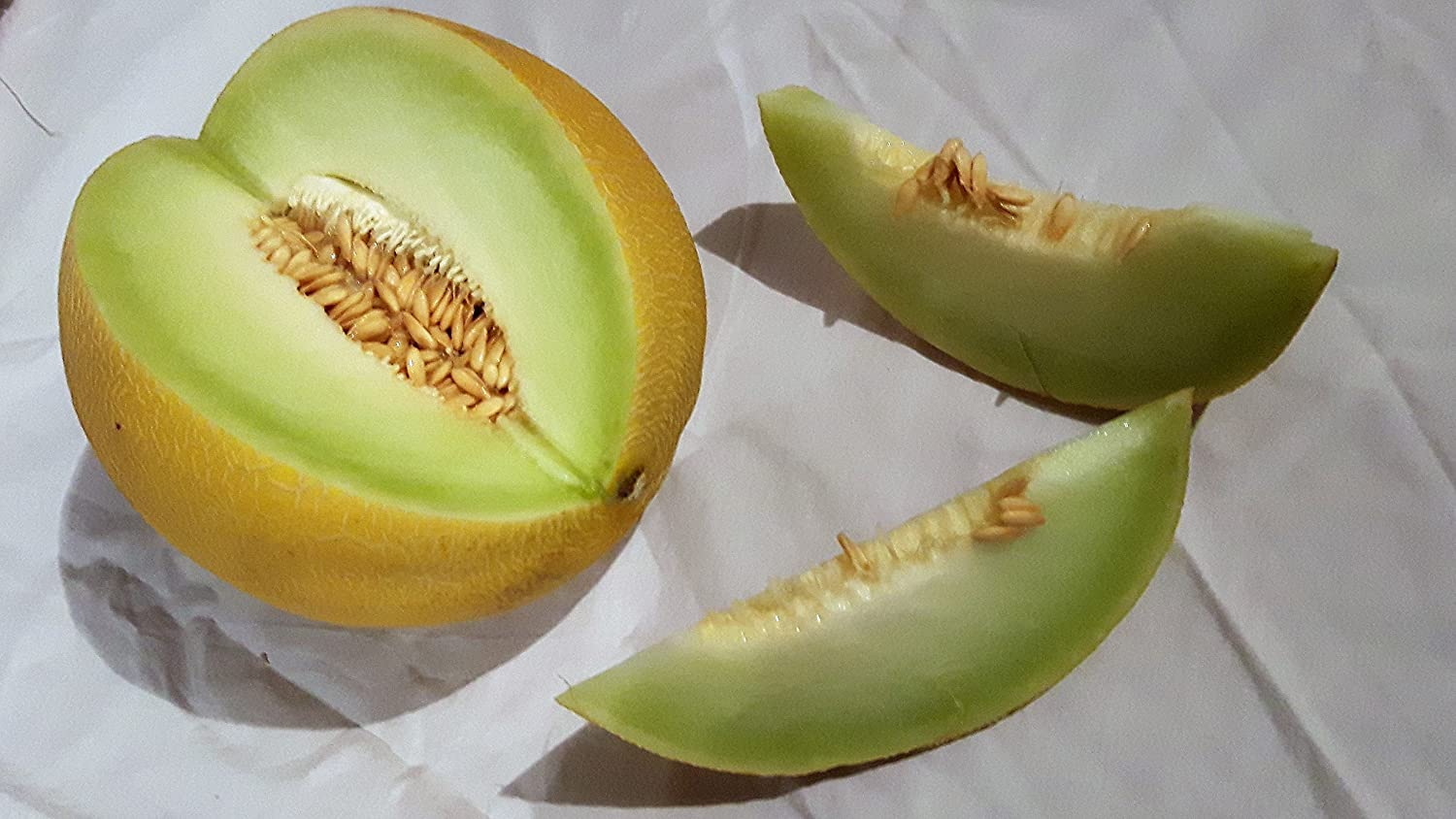GALIA MELON SWEET EDIBLE FRUIT SEEDS PACKET OF FRESHLY PREPARED 20 SEEDS CORNWALL PLANTS