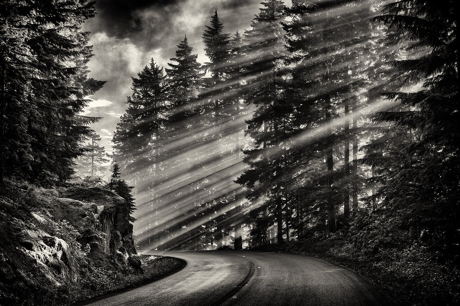 Fine art black and white photography landscape photography black and white mountain road monochromatic nature pine tree mount rainier national park