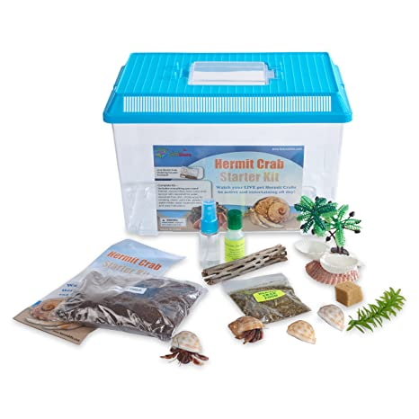 fa143cdca05 Amazon.com  Nature Gift Store LIVE Pet Hermit Crab Complete Starter Kit -  SHIPPED WITH 2 Live Crabs  Toys   Games