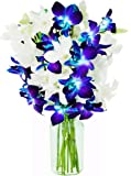 KaBloom Starry Night in the Tropics Bouquet of 5 Blue Dendrobium Orchids & 5 White Dendrobium Orchids from Thailand with Vase