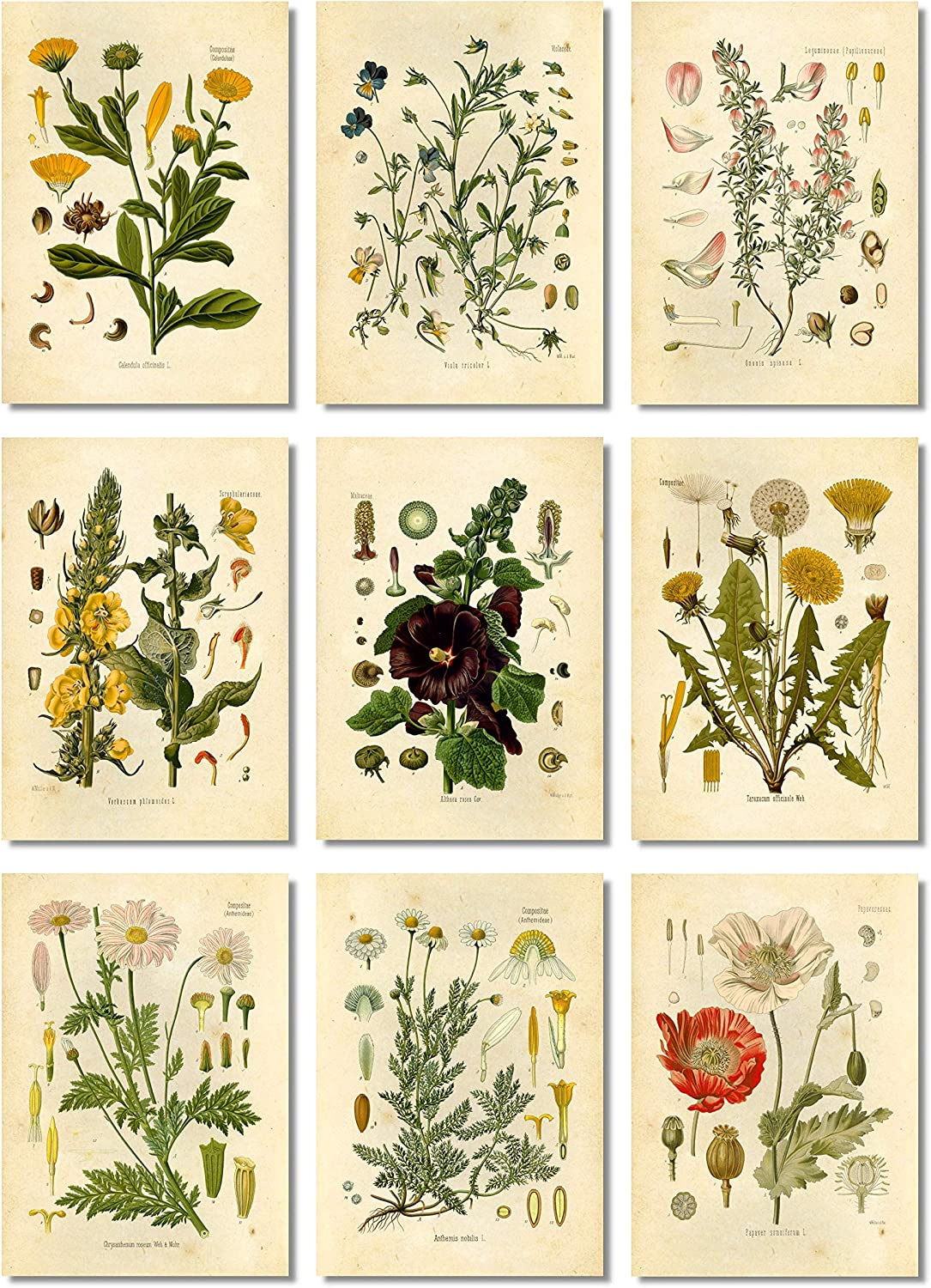 Ink Inc Botanical Prints Floral Wildflowers Wall Art Prints - Set of 9-5x7 - Matte - Unframed