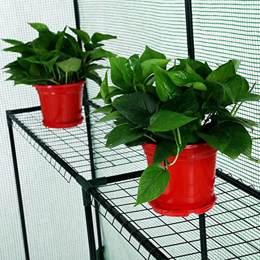 Songmics Invernadero de tomates Caseta para flores cultivos 120 x 186 x 190 cm GWP11L: Amazon.es: Jardín
