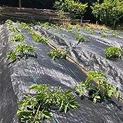 Malla Antihierbas (Rollo 1,05x100 Metros) 110 gr/m2: Amazon.es ...