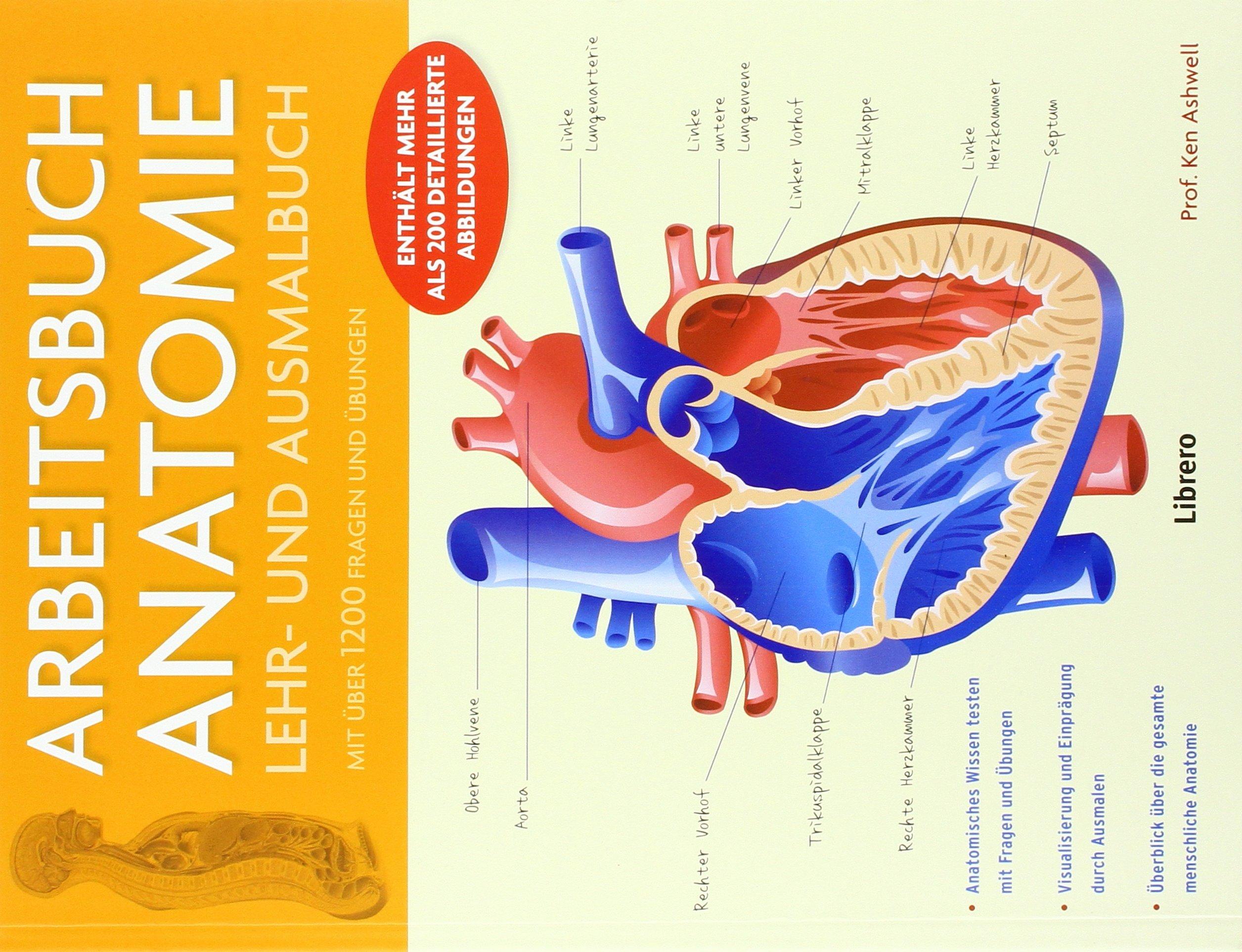 Arbeitsbuch Anatomie: Lehr- und Ausmalbuch: Amazon.de: Ken Ashwell ...