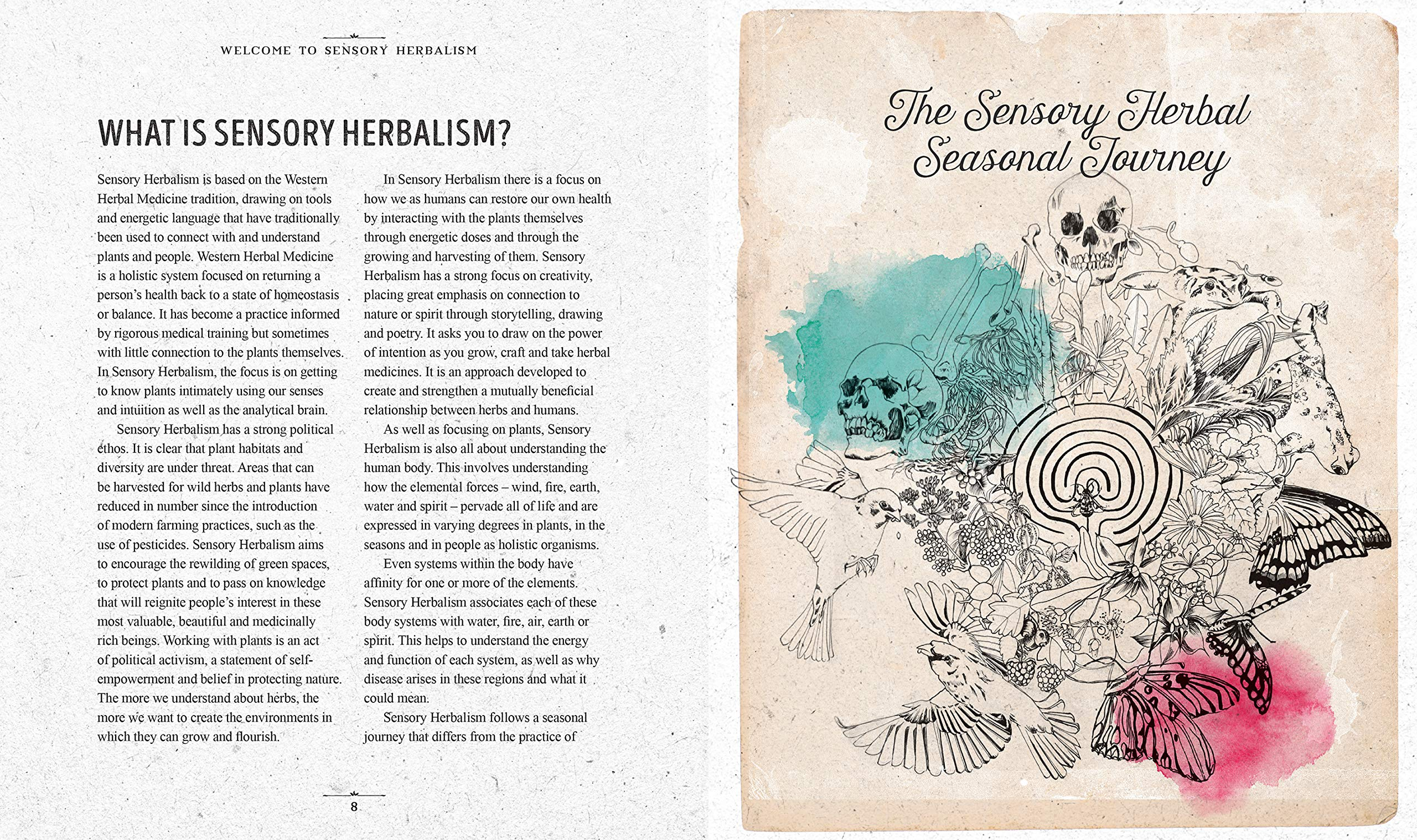 The Sensory Herbal Handbook Connect with the Medicinal Power of Your Local Plants
