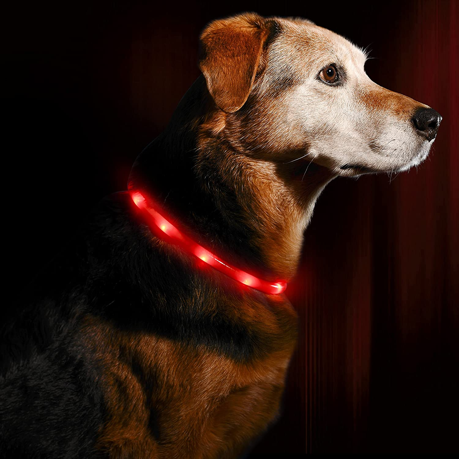 Lava Red LED Dog Necklace Collar USB Rechargeable Loop Available in 6 colors Makes Your Dog Visible, Safe & Seen