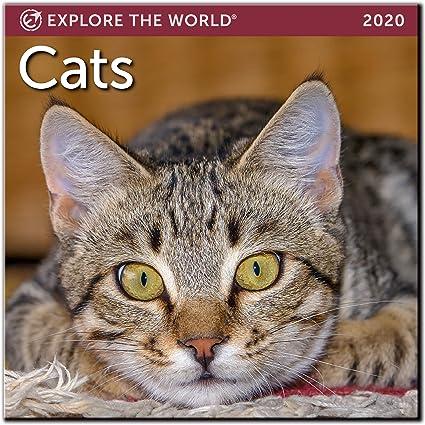 Mini calendario de pared para gatos 2020 mes enero-diciembre 7