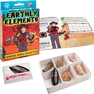 product image for Channel Craft Earthly Elements Genuine Fossil Collection