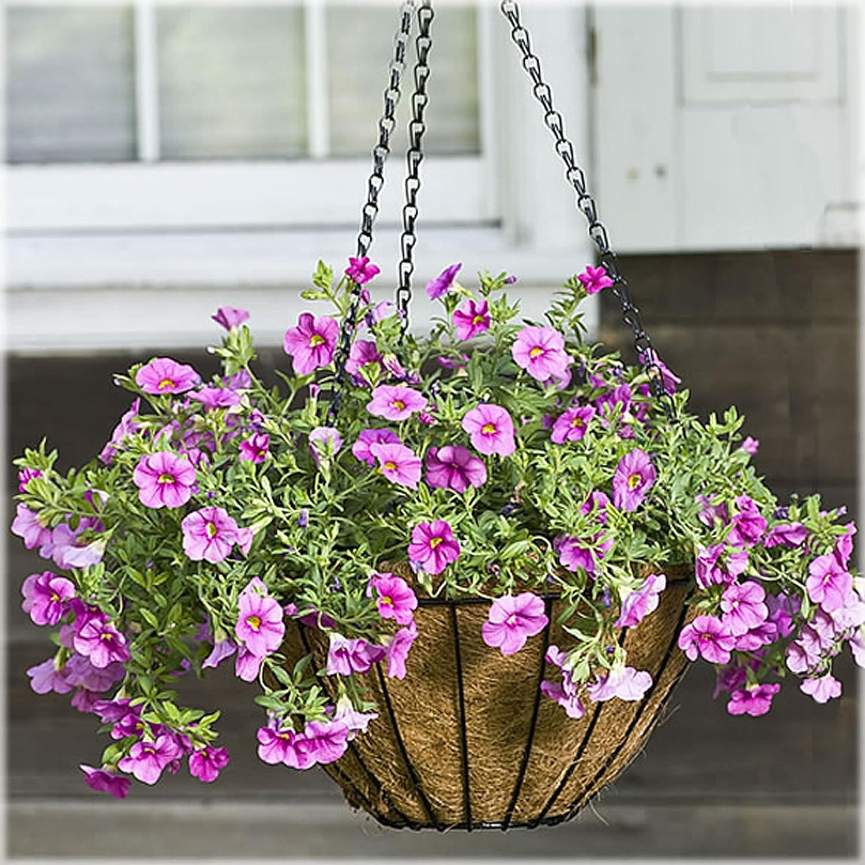 amazon com cobraco black 14 inch growers hanging basket hgb14 b