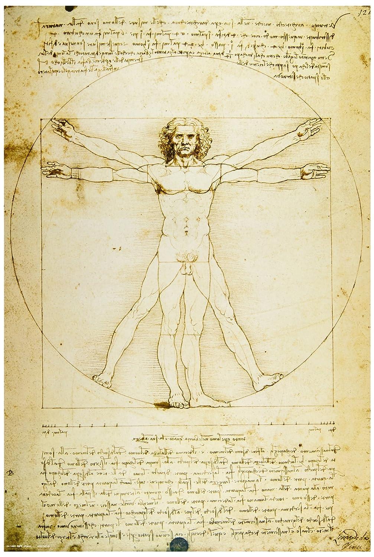 Amazon.com: Leonardo da Vinci - Vitruvian Man, Proportions of the ...