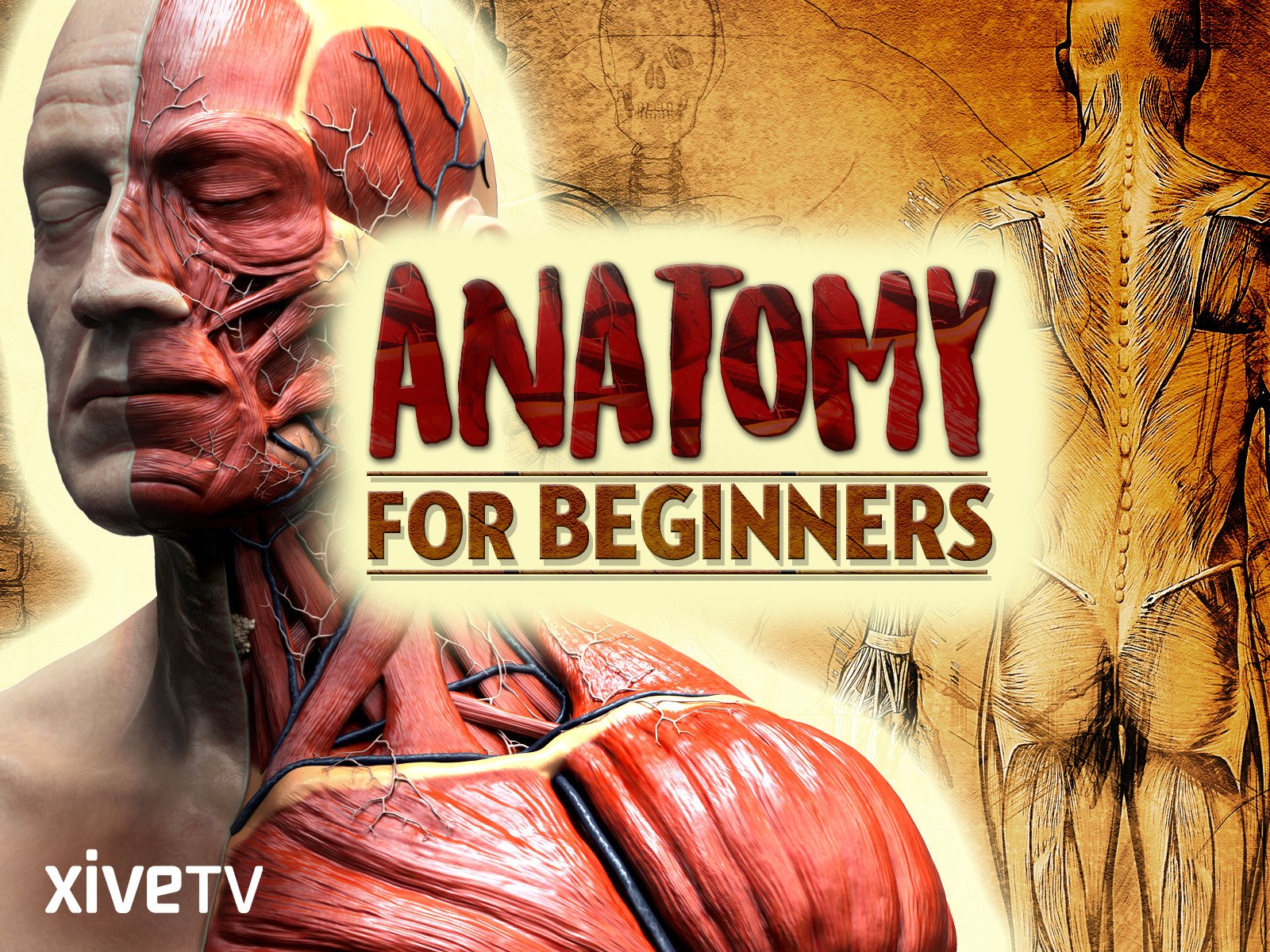 Amazon.com: Anatomy for Beginners: Season 1: David Coleman, Dr ...