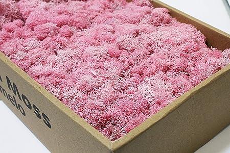 Iceland Moss Fuchsia 1kg preserved Pink Reindeer Preserved Moss Reindeer Moss