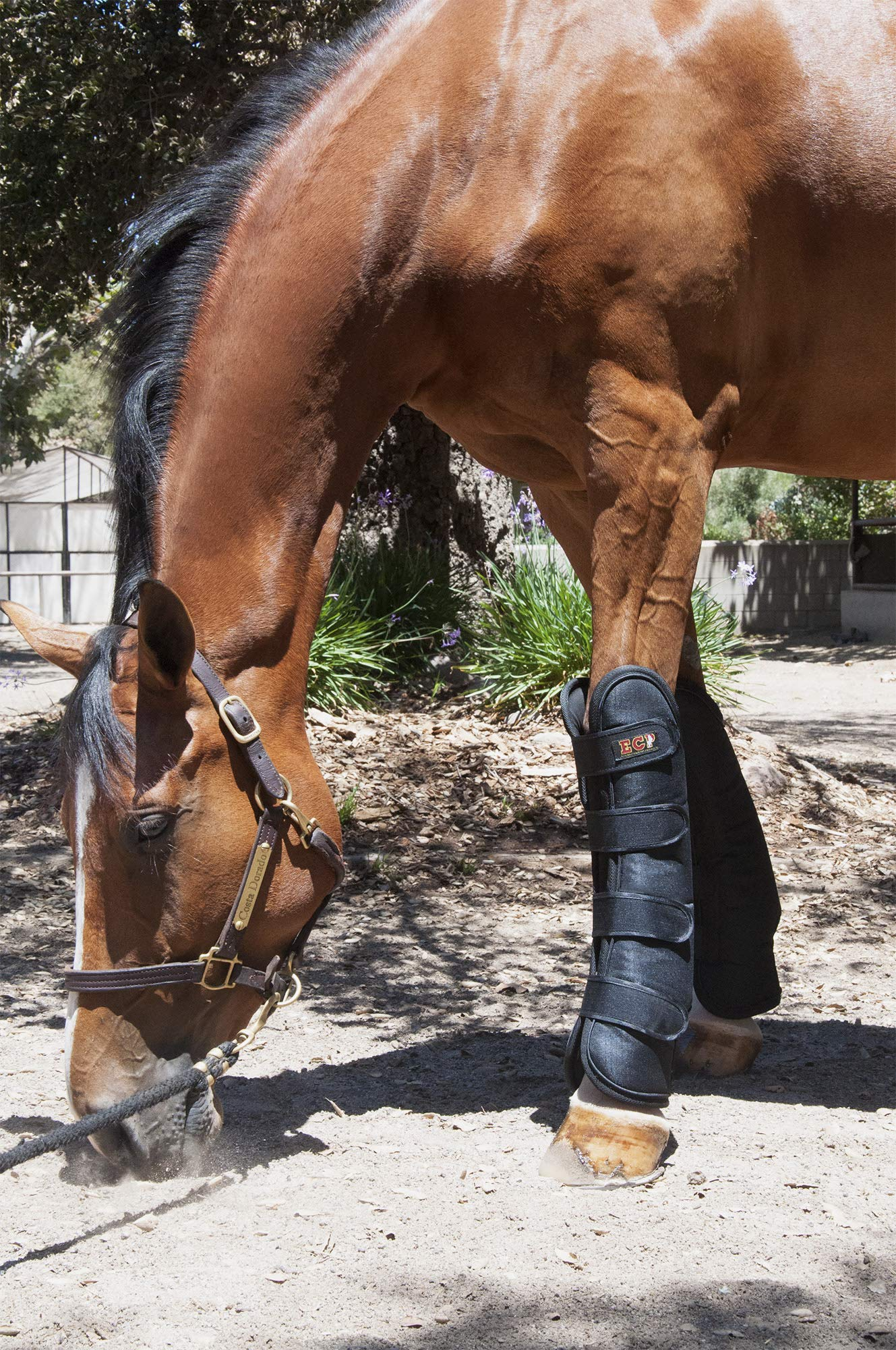 ECP Equine Comfort Products Far Infrared Heat Therapy Horse Front Leg Wraps - Large by ECP Equine Comfort Products (Image #6)