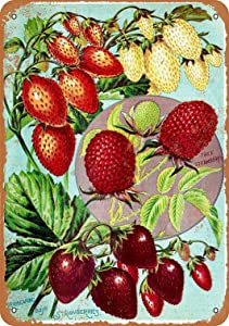 HAIMAX Metal Signs Vintage Retro 8x12 Sign 1902 Tree and Bush Strawberries Berries Funny Fruits Vegetables Food Sweet Summer Wall Home Novlety Tin Sign Novelty for Farm Basement Gym Decor