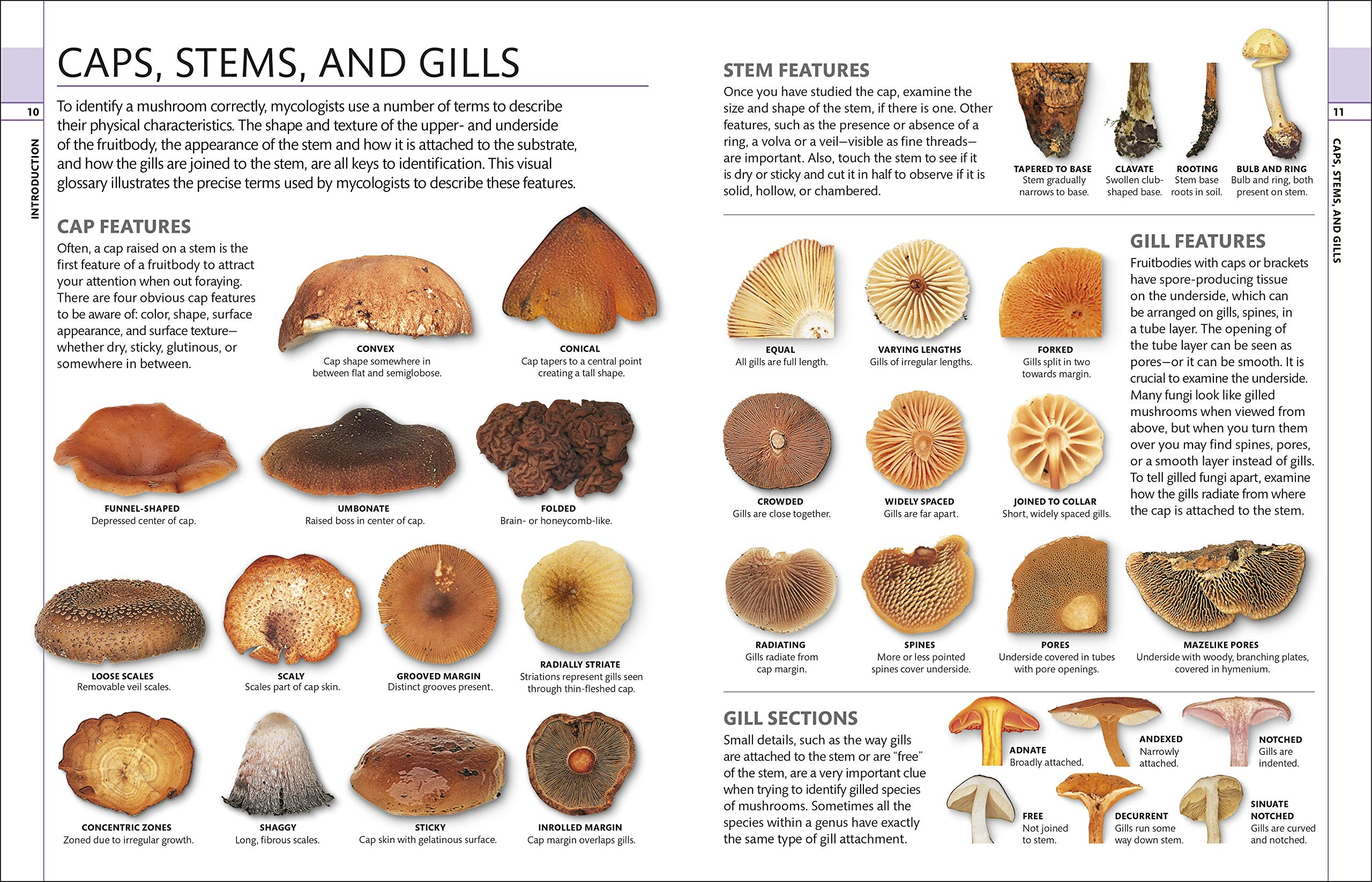 Mushrooms: How to Identify and Gather Wild Mushrooms and