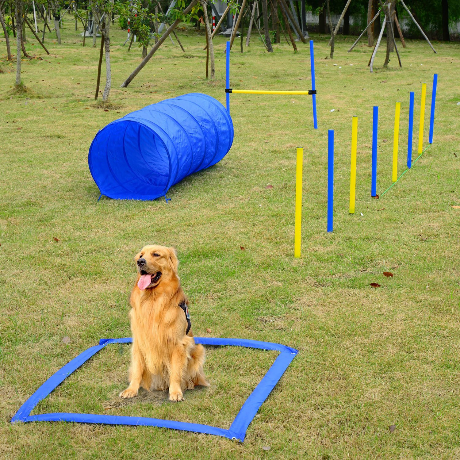 Festnight Outdoor Dog Obstacle Agility Training Exercise Equipment Kit by Festnight