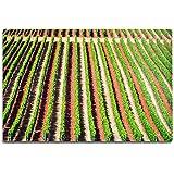 Lantern Press Oregon - Rows of Grape Vines A-9006235 (6x9 Aluminum Wall Sign