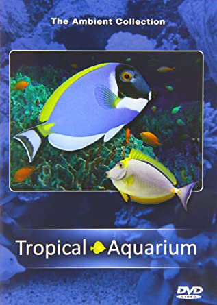 Watch full movie ambient fish tank in english with english for Fish tank full movie