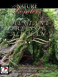 Nature Wonders – The Giant Trees of Alishan
