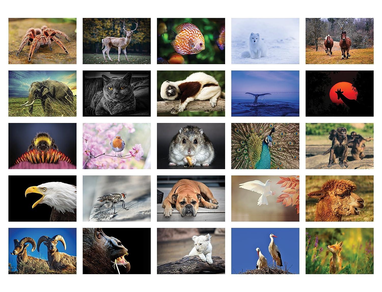 Tiere Postkarten 100 verschiedene Tierpostkarten-set ideal f/ür Sammler und Postcrossing
